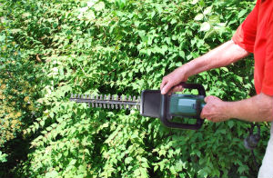 hedge-trimming-brixton